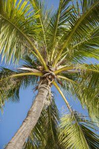 Palmöl enthält viel Vitamin E und ist daher gut für die Haut.