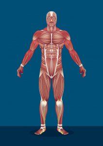 Besonders Jungs haben durch den Wachstum der Muskeln während der Pubertät Probleme mit Dehnungsstreifen.